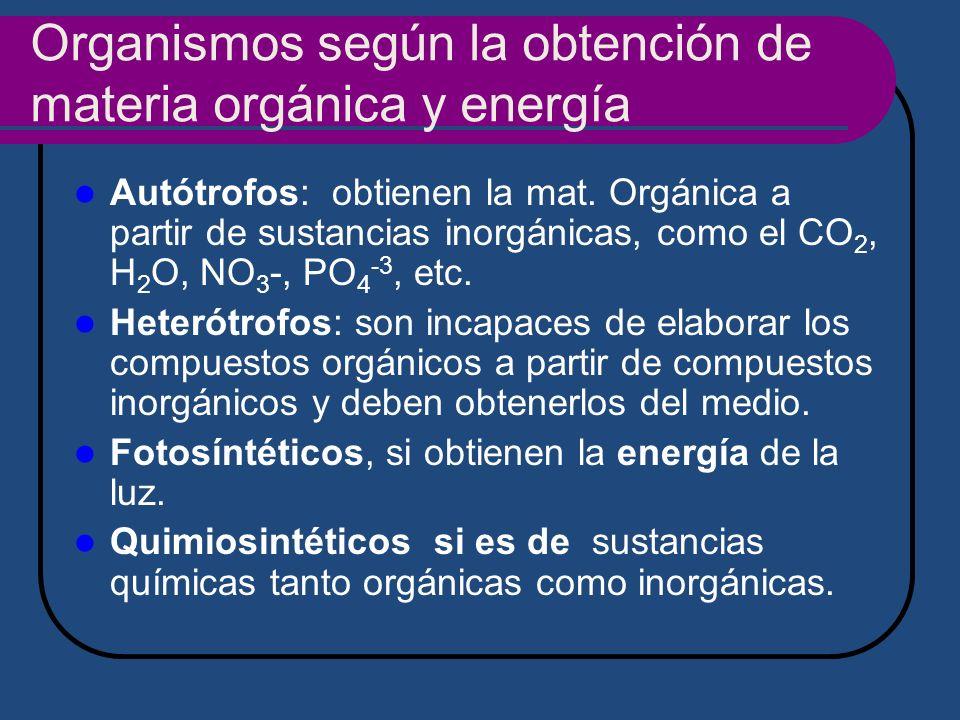 Organismos según la obtención de materia orgánica y energía Autótrofos: obtienen la mat. Orgánica a partir de sustancias inorgánicas, como el CO 2, H