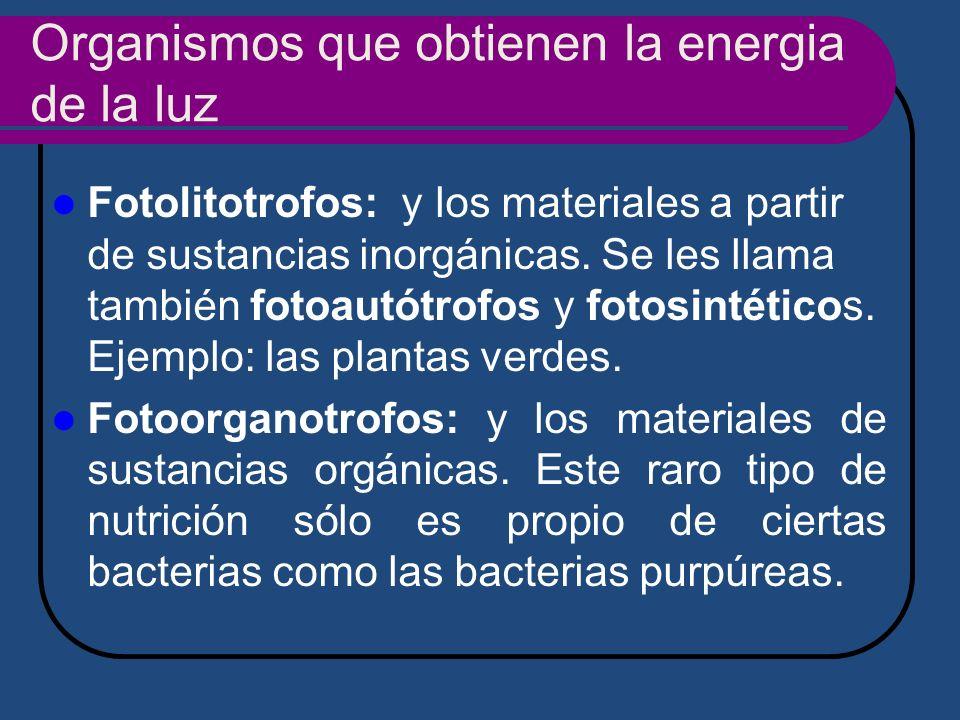 Organismos que obtienen la energia de la luz Fotolitotrofos: y los materiales a partir de sustancias inorgánicas. Se les llama también fotoautótrofos