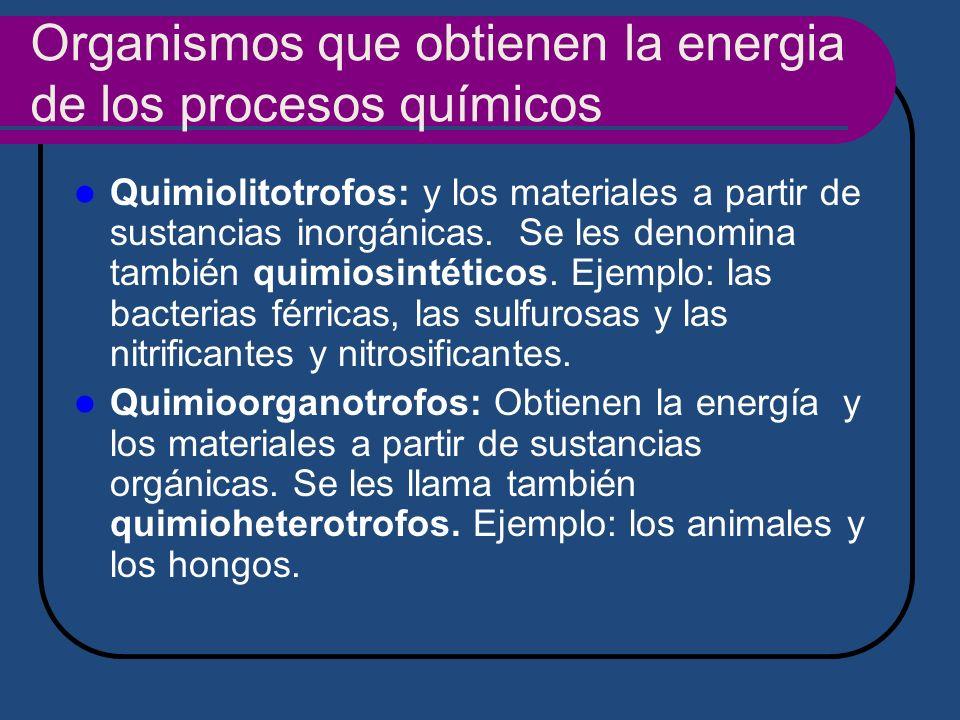 Organismos que obtienen la energia de los procesos químicos Quimiolitotrofos: y los materiales a partir de sustancias inorgánicas. Se les denomina tam