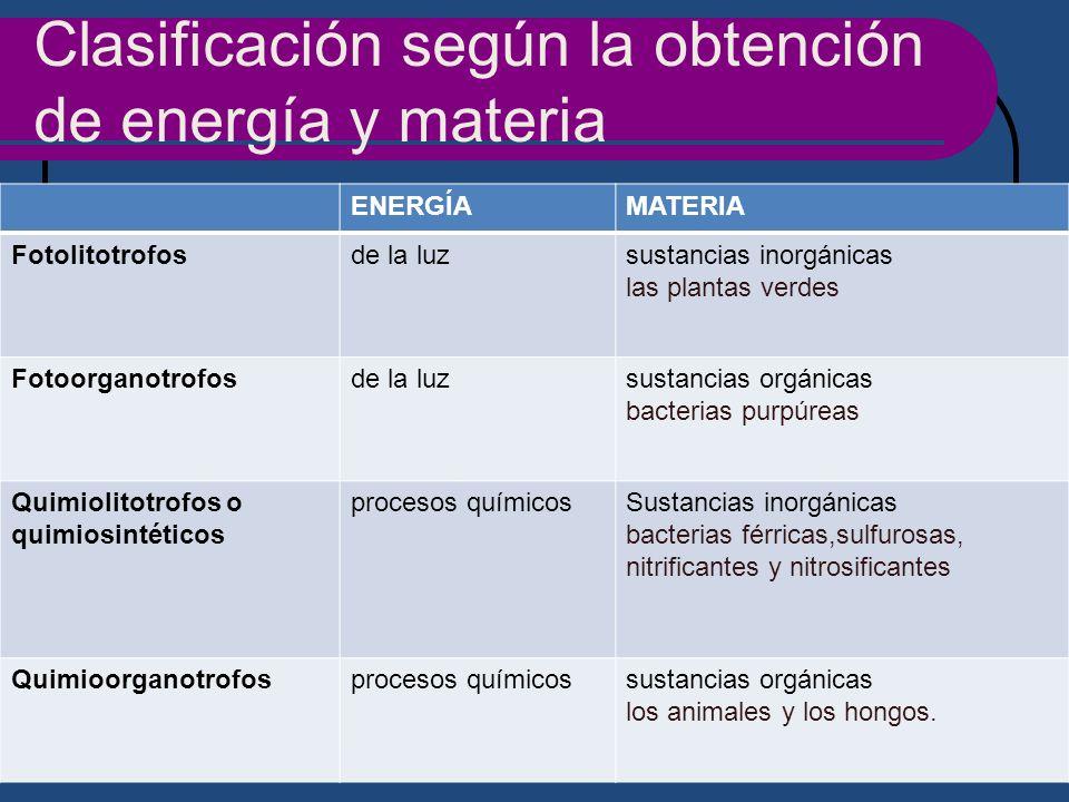 Clasificación según la obtención de energía y materia ENERGÍAMATERIA Fotolitotrofosde la luzsustancias inorgánicas las plantas verdes Fotoorganotrofos