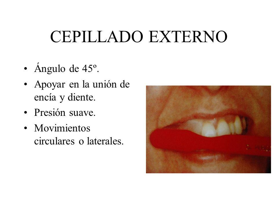 CEPILLADO EXTERNO Ángulo de 45º. Apoyar en la unión de encía y diente. Presión suave. Movimientos circulares o laterales.