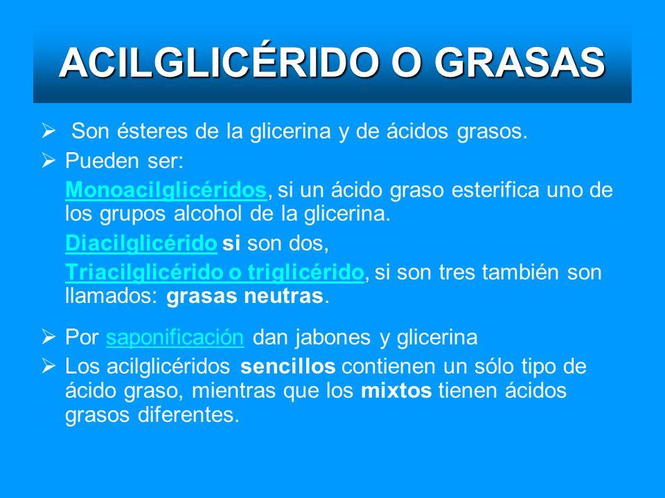 ACILGLICÉRIDO O GRASAS Son ésteres de la glicerina y de ácidos grasos. Pueden ser: MonoacilglicéridosMonoacilglicéridos, si un ácido graso esterifica