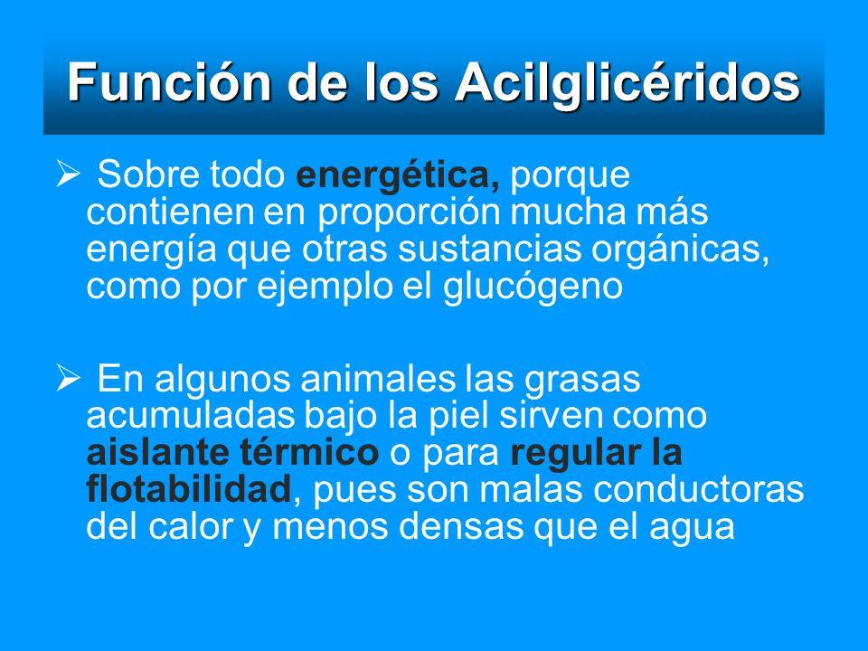 Función de los Acilglicéridos Sobre todo energética, porque contienen en proporción mucha más energía que otras sustancias orgánicas, como por ejemplo