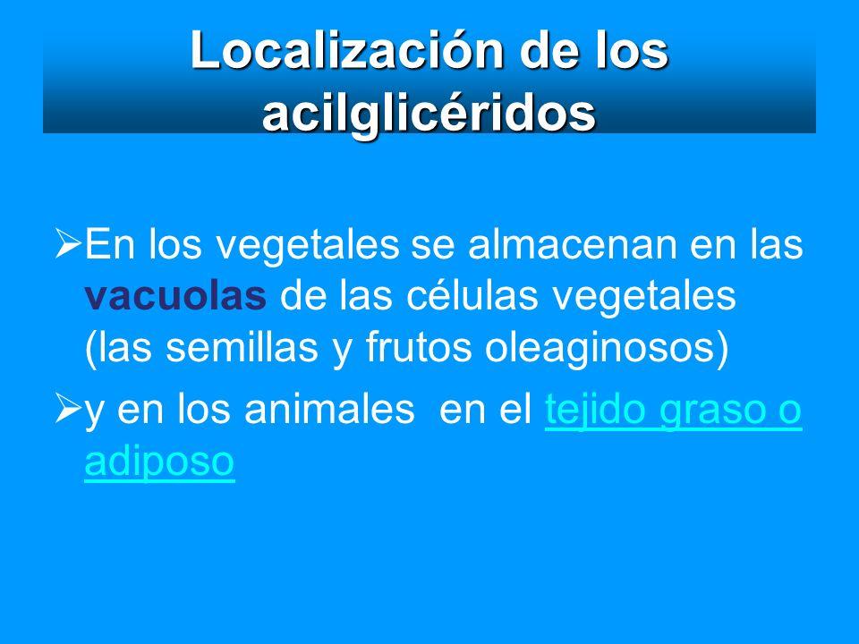 Localización de los acilglicéridos En los vegetales se almacenan en las vacuolas de las células vegetales (las semillas y frutos oleaginosos) y en los