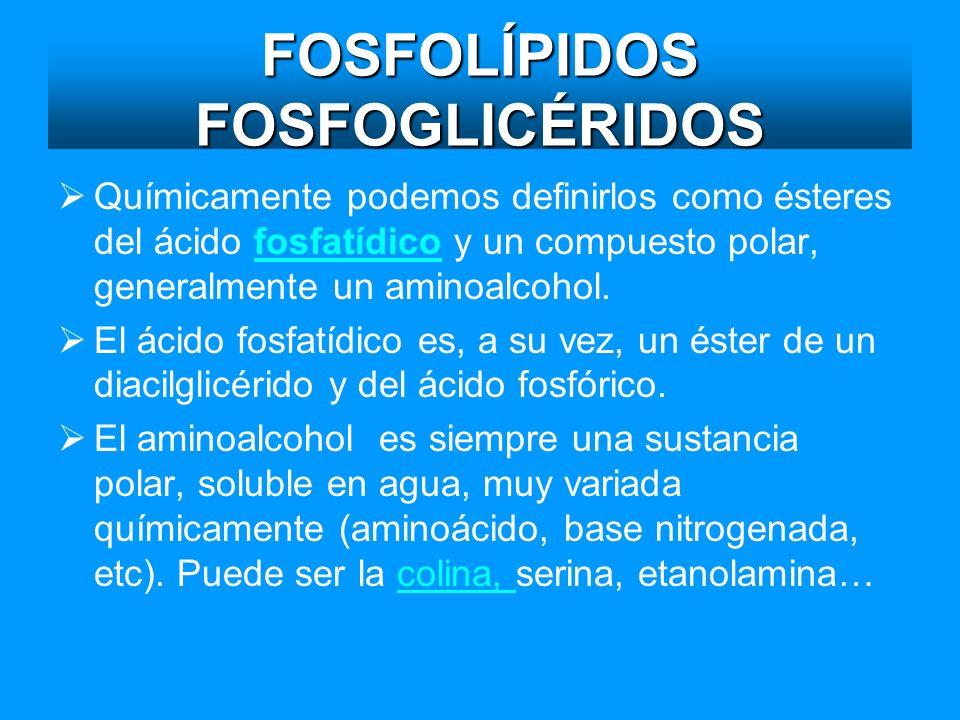 FOSFOLÍPIDOS FOSFOGLICÉRIDOS Químicamente podemos definirlos como ésteres del ácido fosfatídico y un compuesto polar, generalmente un aminoalcohol.fos