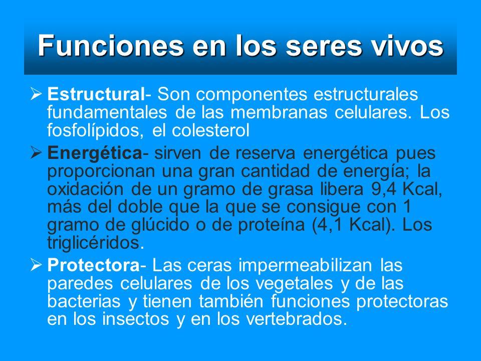 Funciones en los seres vivos Estructural- Son componentes estructurales fundamentales de las membranas celulares. Los fosfolípidos, el colesterol Ener