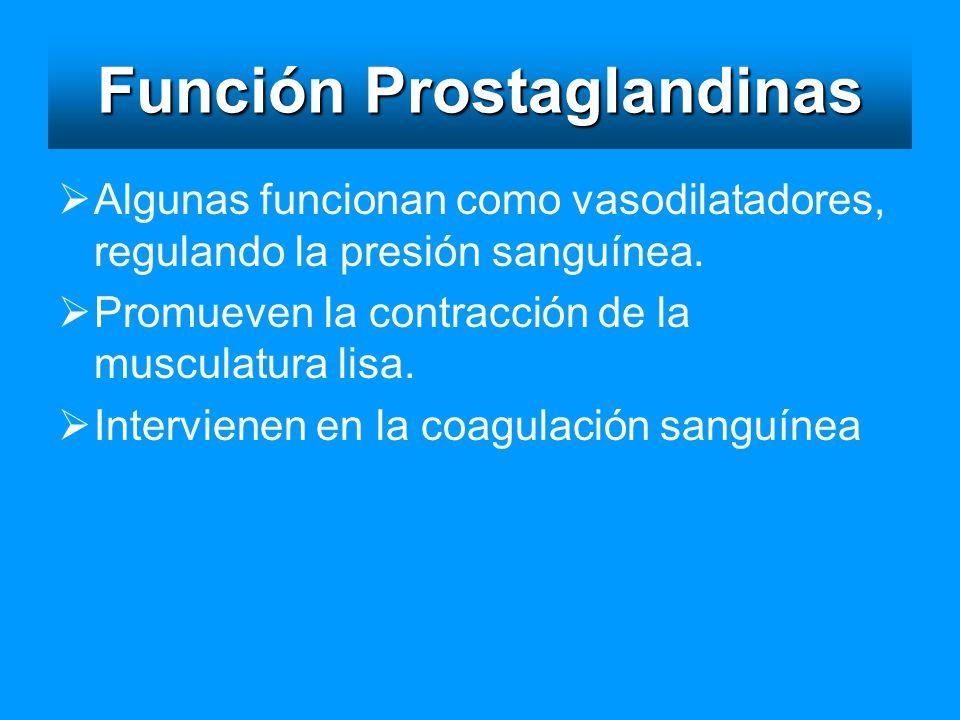 Función Prostaglandinas Algunas funcionan como vasodilatadores, regulando la presión sanguínea. Promueven la contracción de la musculatura lisa. Inter