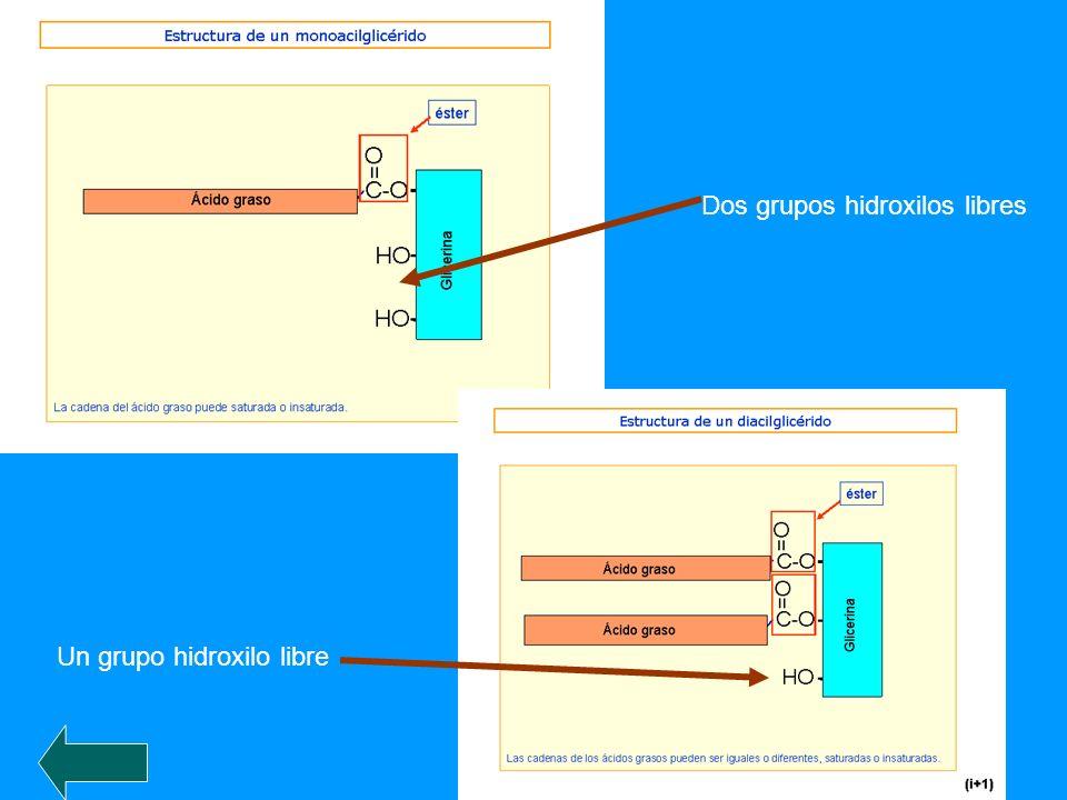 Dos grupos hidroxilos libres Un grupo hidroxilo libre
