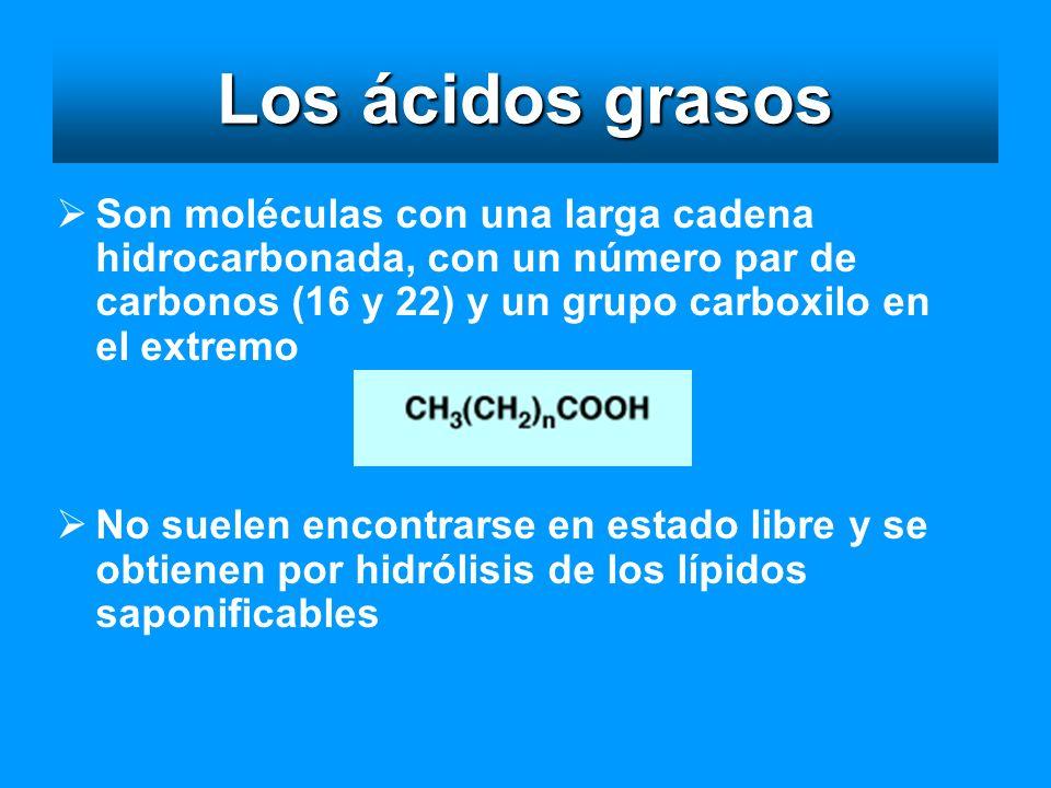 Los ácidos grasos Son moléculas con una larga cadena hidrocarbonada, con un número par de carbonos (16 y 22) y un grupo carboxilo en el extremo No sue