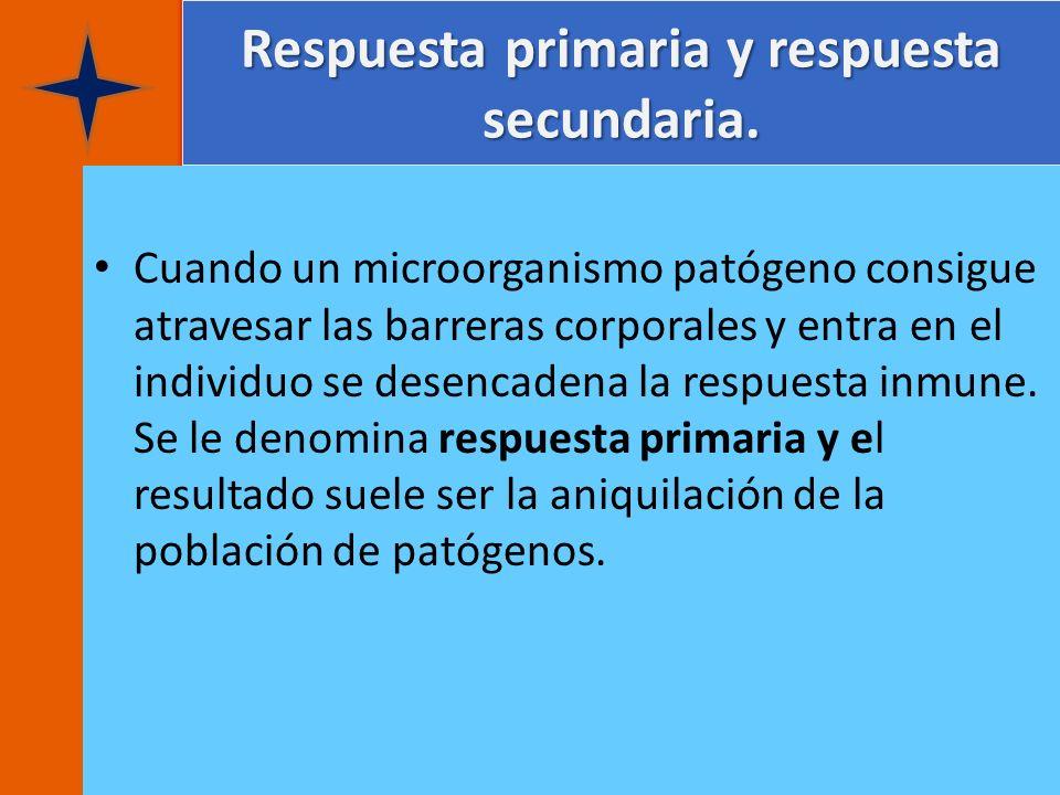 Respuesta primaria y respuesta secundaria. Cuando un microorganismo patógeno consigue atravesar las barreras corporales y entra en el individuo se des
