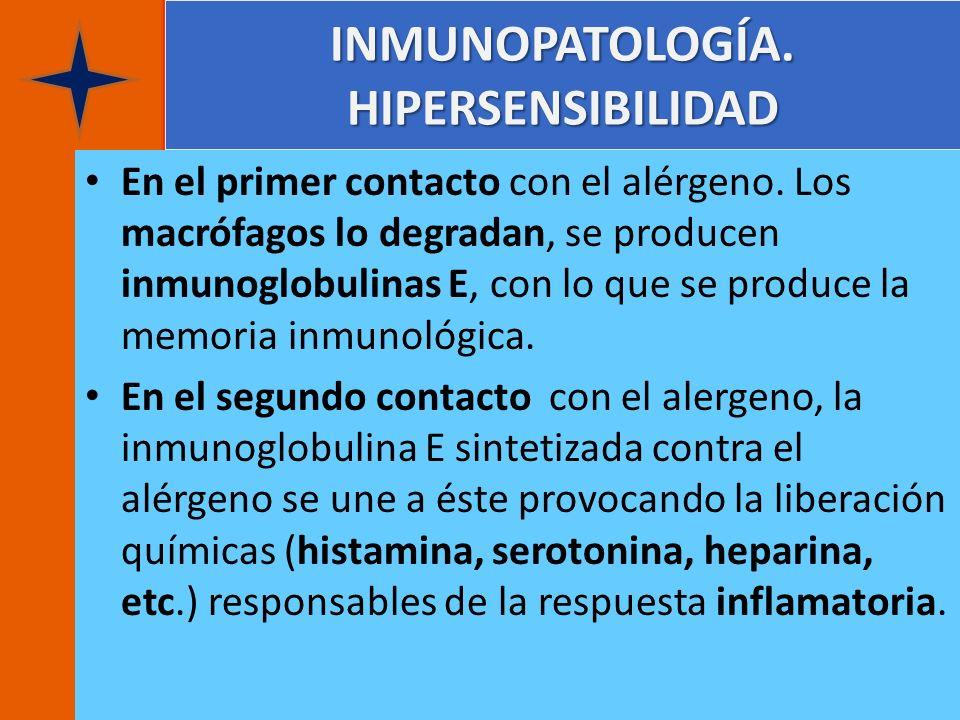 INMUNOPATOLOGÍA. HIPERSENSIBILIDAD En el primer contacto con el alérgeno. Los macrófagos lo degradan, se producen inmunoglobulinas E, con lo que se pr
