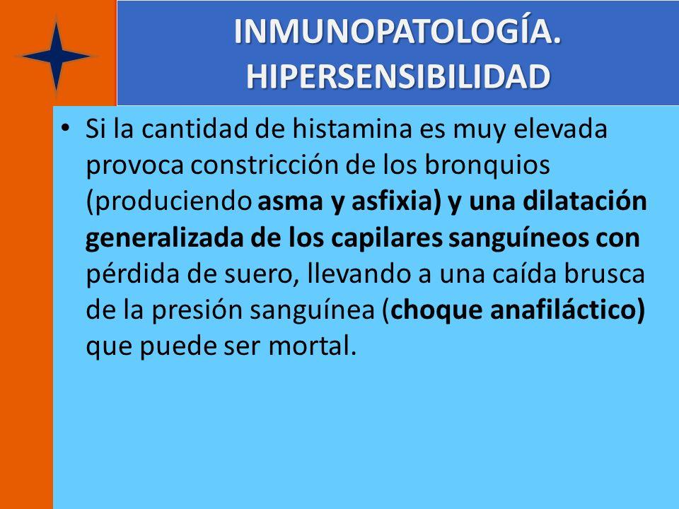 INMUNOPATOLOGÍA. HIPERSENSIBILIDAD Si la cantidad de histamina es muy elevada provoca constricción de los bronquios (produciendo asma y asfixia) y una