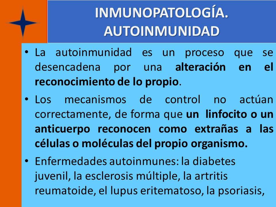 INMUNOPATOLOGÍA. AUTOINMUNIDAD La autoinmunidad es un proceso que se desencadena por una alteración en el reconocimiento de lo propio. Los mecanismos