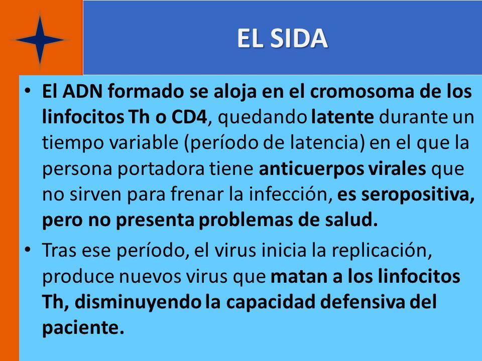 EL SIDA El ADN formado se aloja en el cromosoma de los linfocitos Th o CD4, quedando latente durante un tiempo variable (período de latencia) en el qu