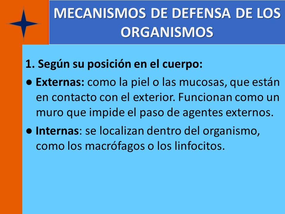 MECANISMOS DE DEFENSA DE LOS ORGANISMOS 1. Según su posición en el cuerpo: Externas: como la piel o las mucosas, que están en contacto con el exterior