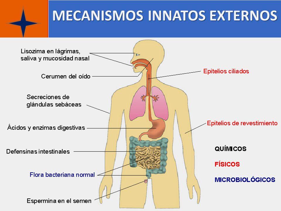 MECANISMOS INNATOS EXTERNOS