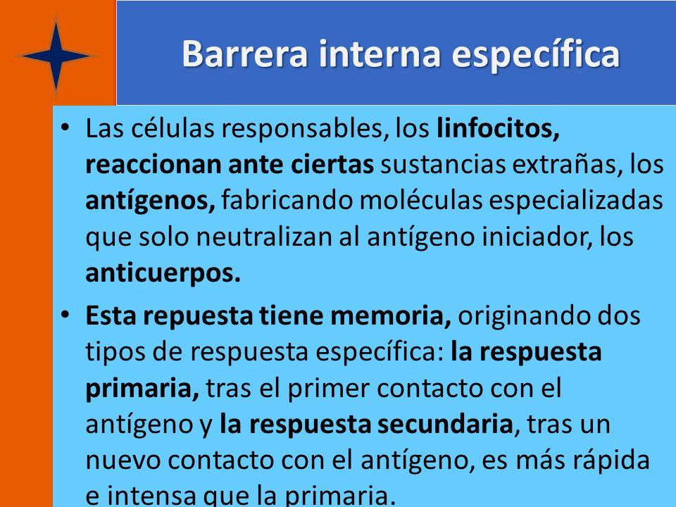 Barrera interna específica Barrera interna específica Las células responsables, los linfocitos, reaccionan ante ciertas sustancias extrañas, los antíg