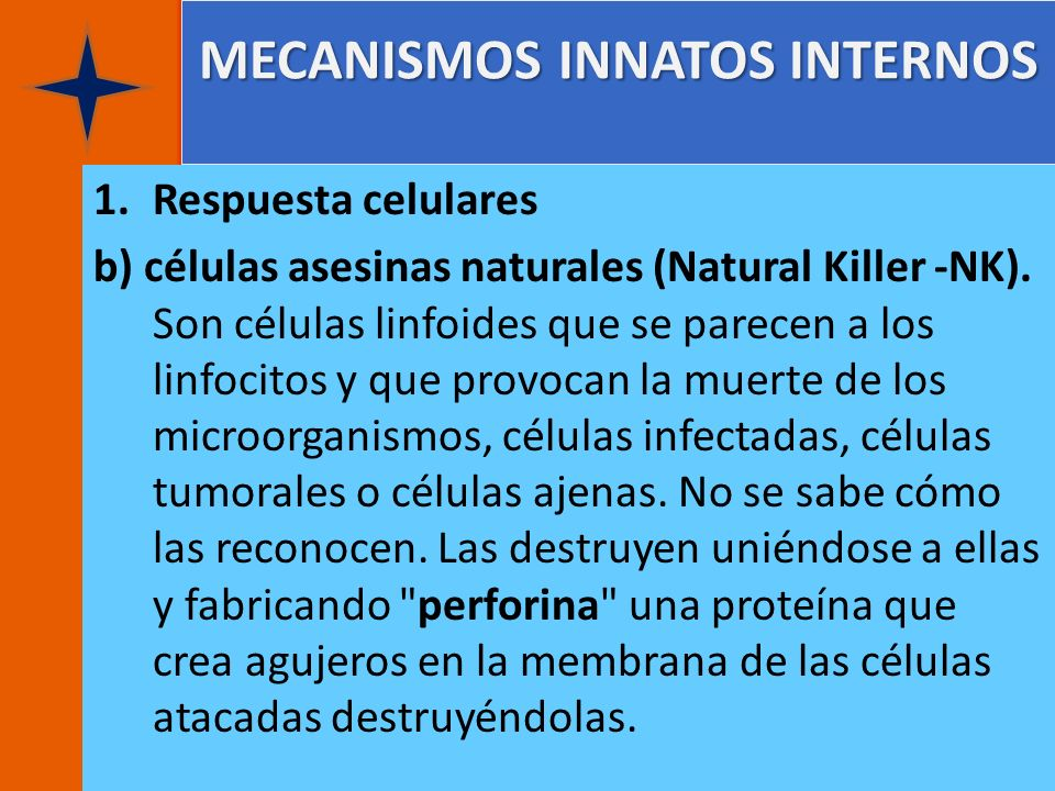 MECANISMOS INNATOS INTERNOS 1.Respuesta celulares b) células asesinas naturales (Natural Killer -NK). Son células linfoides que se parecen a los linfo