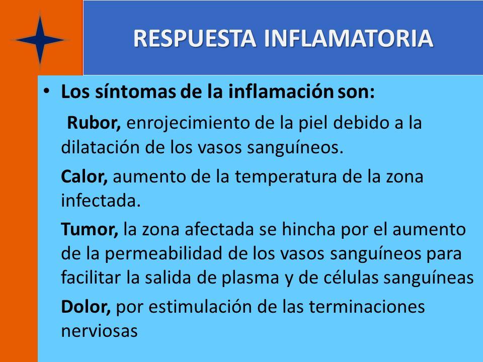 RESPUESTA INFLAMATORIA Los síntomas de la inflamación son: Rubor, enrojecimiento de la piel debido a la dilatación de los vasos sanguíneos. Calor, aum