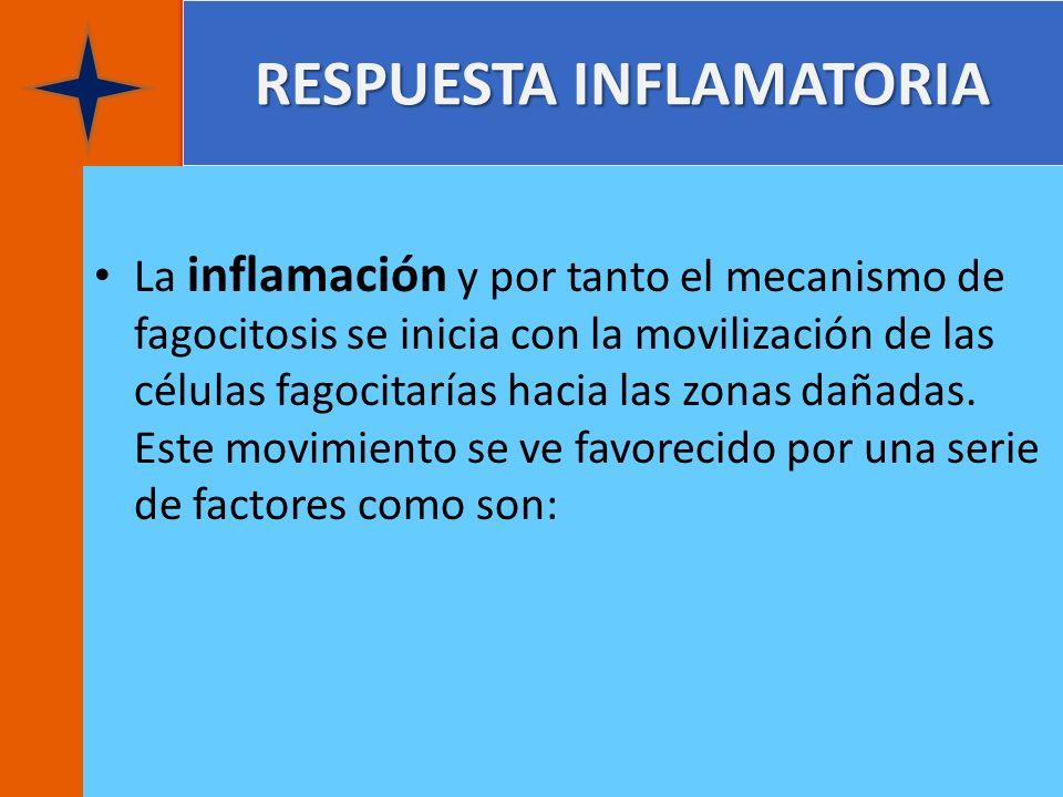 RESPUESTA INFLAMATORIA La inflamación y por tanto el mecanismo de fagocitosis se inicia con la movilización de las células fagocitarías hacia las zona