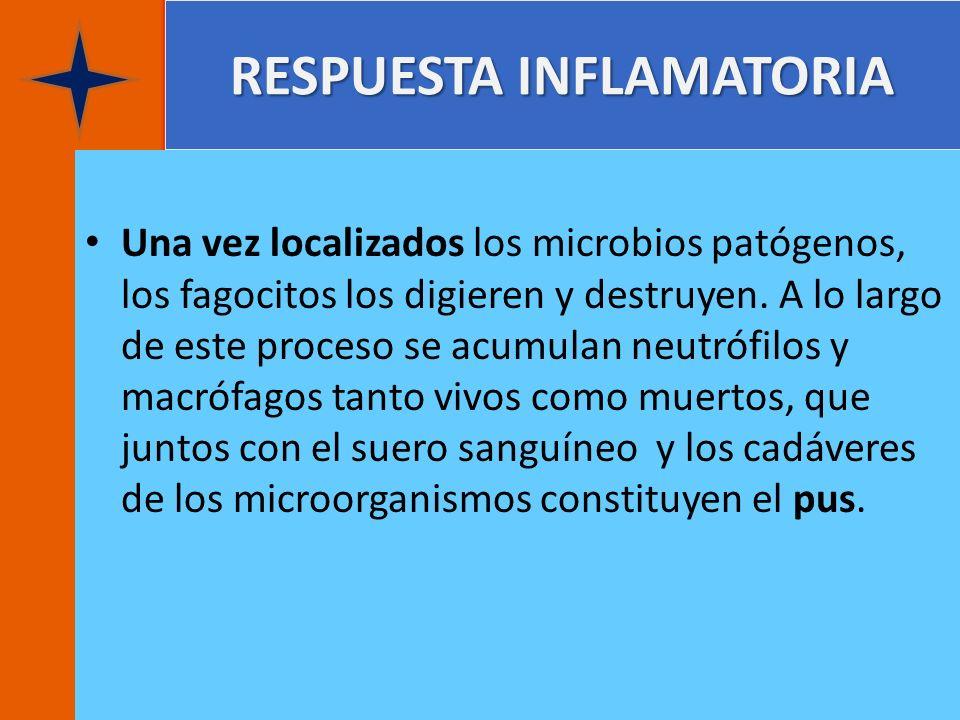 RESPUESTA INFLAMATORIA Una vez localizados los microbios patógenos, los fagocitos los digieren y destruyen. A lo largo de este proceso se acumulan neu