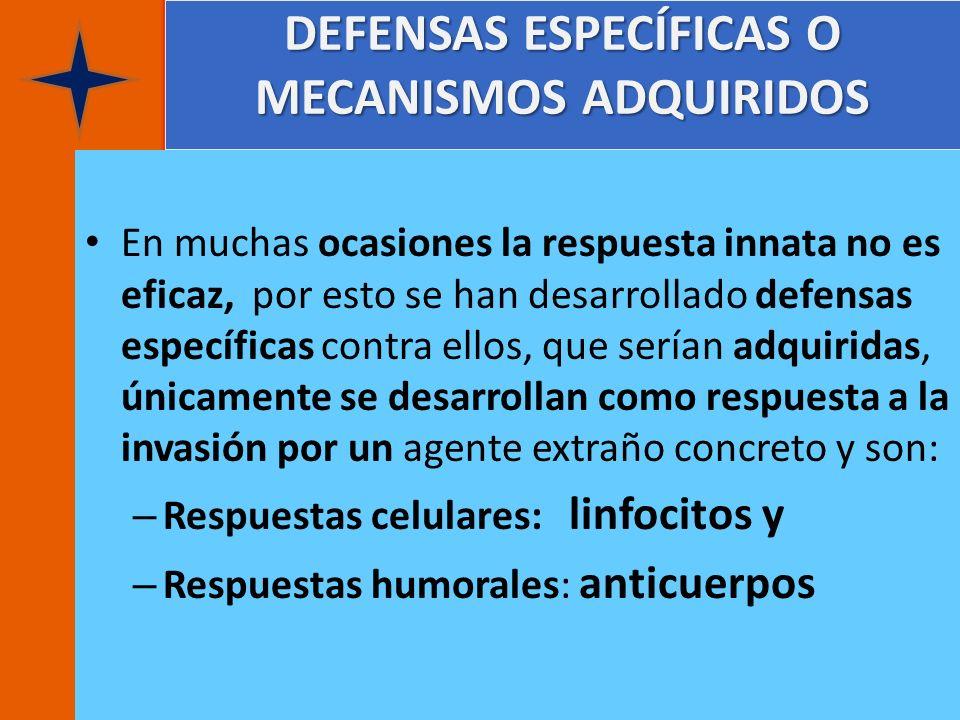 DEFENSAS ESPECÍFICAS O MECANISMOS ADQUIRIDOS En muchas ocasiones la respuesta innata no es eficaz, por esto se han desarrollado defensas específicas c