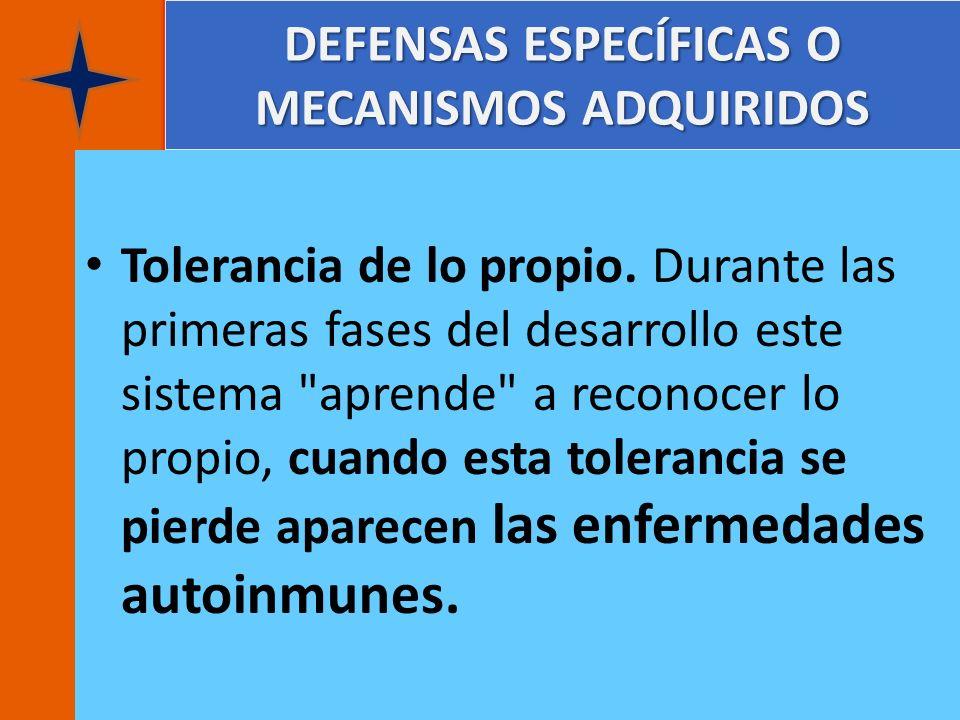 DEFENSAS ESPECÍFICAS O MECANISMOS ADQUIRIDOS Tolerancia de lo propio. Durante las primeras fases del desarrollo este sistema