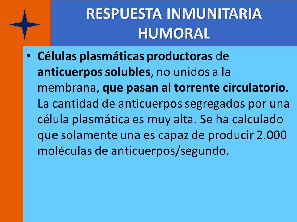 RESPUESTA INMUNITARIA HUMORAL Células plasmáticas productoras de anticuerpos solubles, no unidos a la membrana, que pasan al torrente circulatorio. La