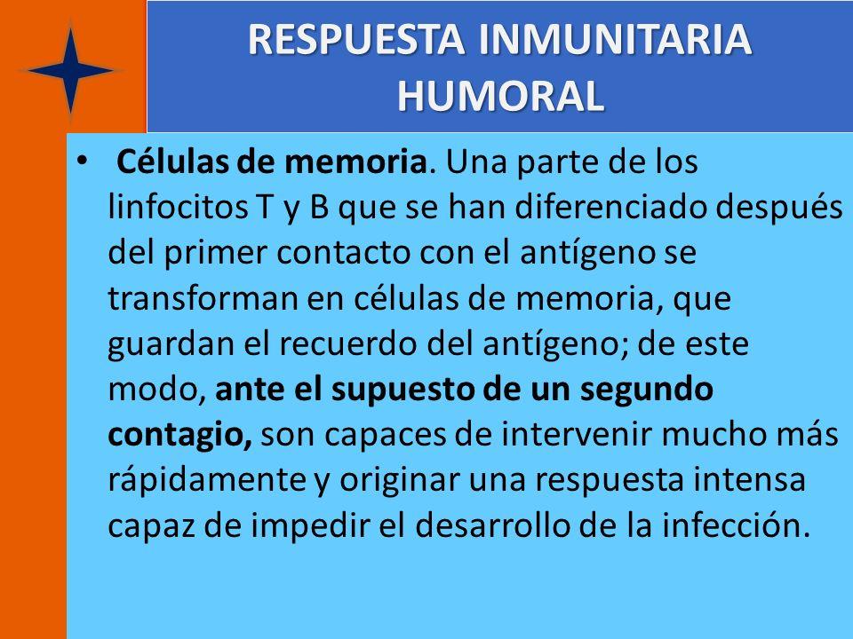 RESPUESTA INMUNITARIA HUMORAL Células de memoria. Una parte de los linfocitos T y B que se han diferenciado después del primer contacto con el antígen