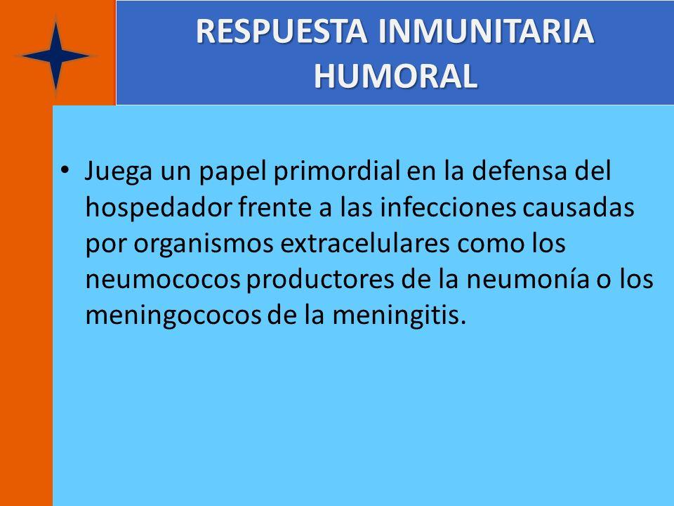 RESPUESTA INMUNITARIA HUMORAL Juega un papel primordial en la defensa del hospedador frente a las infecciones causadas por organismos extracelulares c