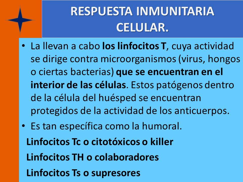 RESPUESTA INMUNITARIA CELULAR. RESPUESTA INMUNITARIA CELULAR. La llevan a cabo los linfocitos T, cuya actividad se dirige contra microorganismos (viru