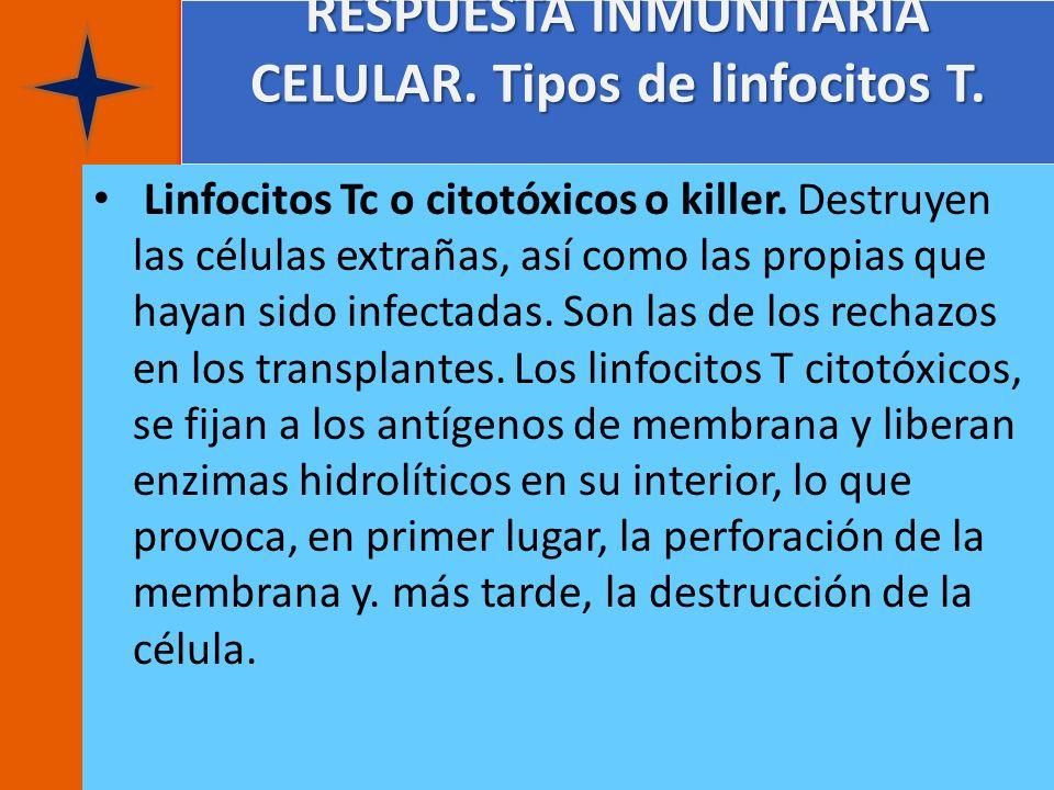 RESPUESTA INMUNITARIA CELULAR. Tipos de linfocitos T. Linfocitos Tc o citotóxicos o killer. Destruyen las células extrañas, así como las propias que h