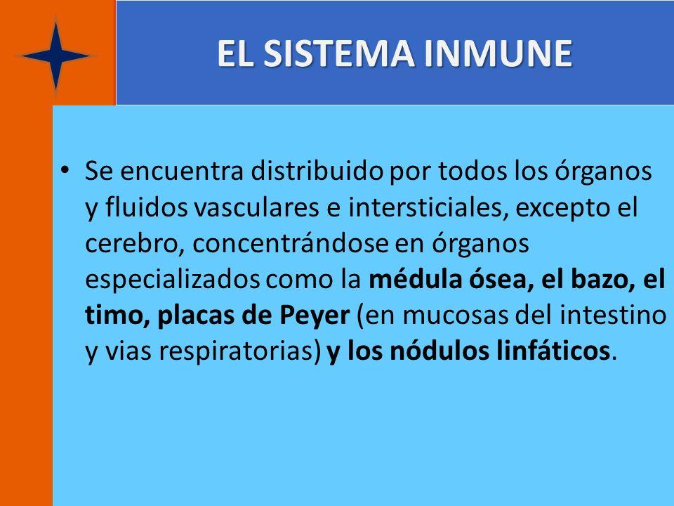 EL SISTEMA INMUNE Se encuentra distribuido por todos los órganos y fluidos vasculares e intersticiales, excepto el cerebro, concentrándose en órganos