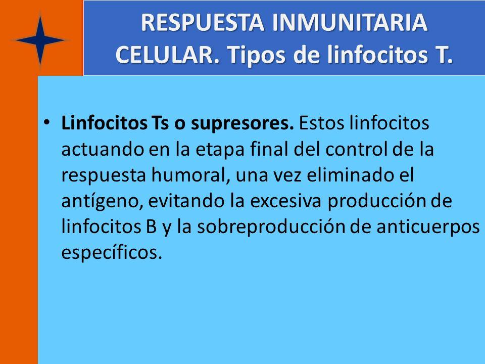 RESPUESTA INMUNITARIA CELULAR. Tipos de linfocitos T. Linfocitos Ts o supresores. Estos linfocitos actuando en la etapa final del control de la respue