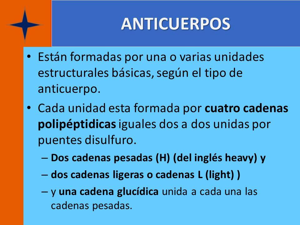 ANTICUERPOS Están formadas por una o varias unidades estructurales básicas, según el tipo de anticuerpo. Cada unidad esta formada por cuatro cadenas p