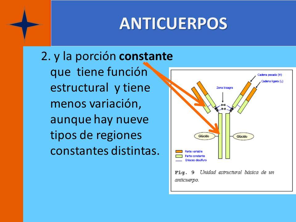 ANTICUERPOS 2. y la porción constante que tiene función estructural y tiene menos variación, aunque hay nueve tipos de regiones constantes distintas.