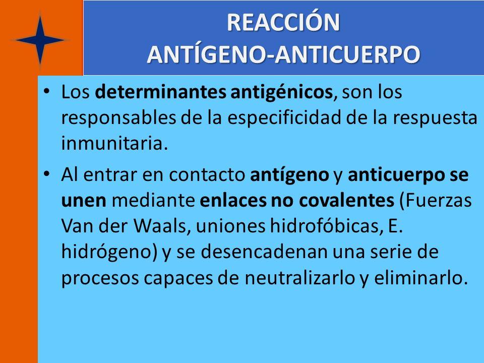 REACCIÓN ANTÍGENO-ANTICUERPO Los determinantes antigénicos, son los responsables de la especificidad de la respuesta inmunitaria. Al entrar en contact