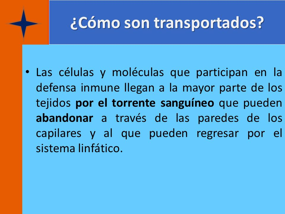 ¿Cómo son transportados? Las células y moléculas que participan en la defensa inmune llegan a la mayor parte de los tejidos por el torrente sanguíneo