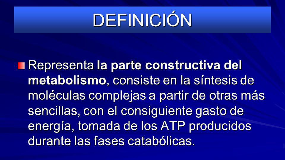 DEFINICIÓN Representa la parte constructiva del metabolismo, consiste en la síntesis de moléculas complejas a partir de otras más sencillas, con el consiguiente gasto de energía, tomada de los ATP producidos durante las fases catabólicas.