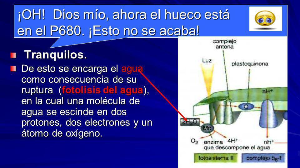 Relleno del hueco dejado por los electrones en el P700 fotosistema II P680