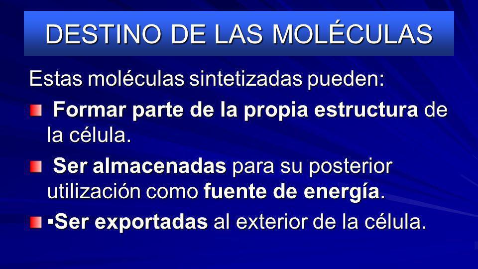 DESTINO DE LAS MOLÉCULAS Estas moléculas sintetizadas pueden: Formar parte de la propia estructura de la célula.