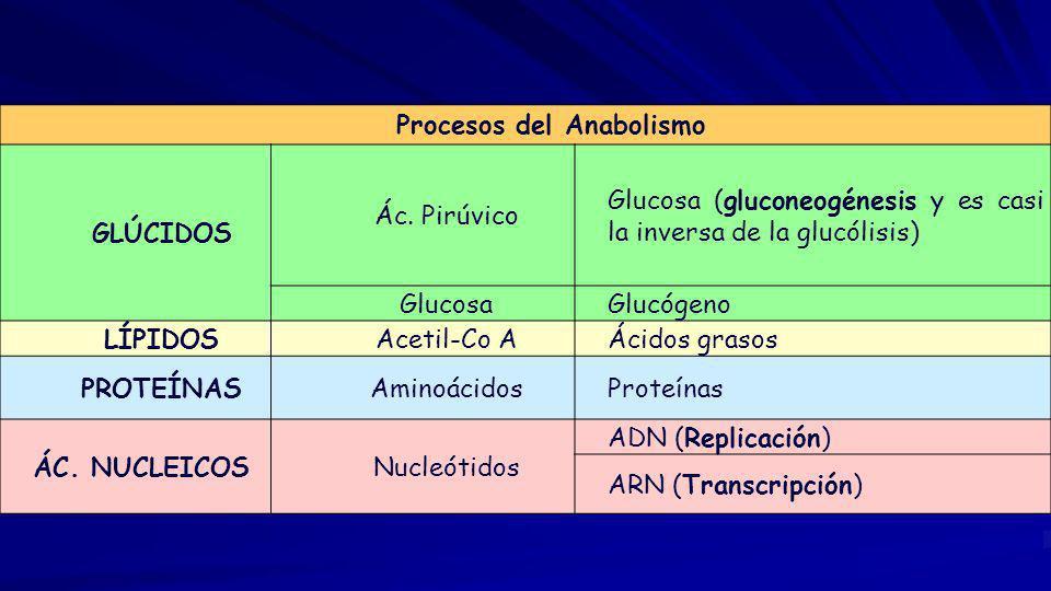 Procesos del Anabolismo GLÚCIDOS Ác.