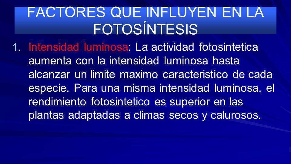 LA FOTORRESPIRACIÓN El que el enzima actúe como carboxilasa u oxigenasa depende de las concentraciones relativas del CO 2 y del O 2 en el interior de