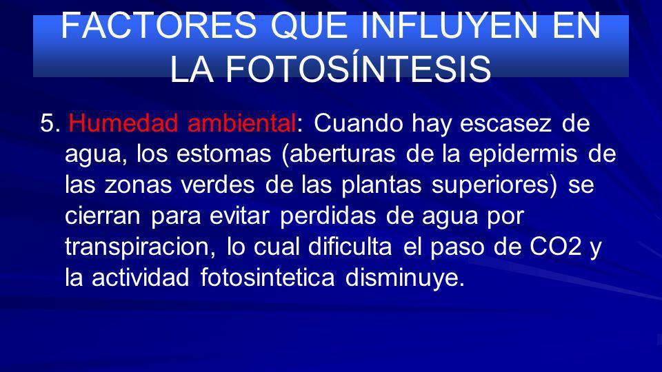 FACTORES QUE INFLUYEN EN LA FOTOSÍNTESIS 4. Temperatura: Como toda actividad enzimatica, la fotosintesis aumenta con la T hasta alcanzar un limite máx