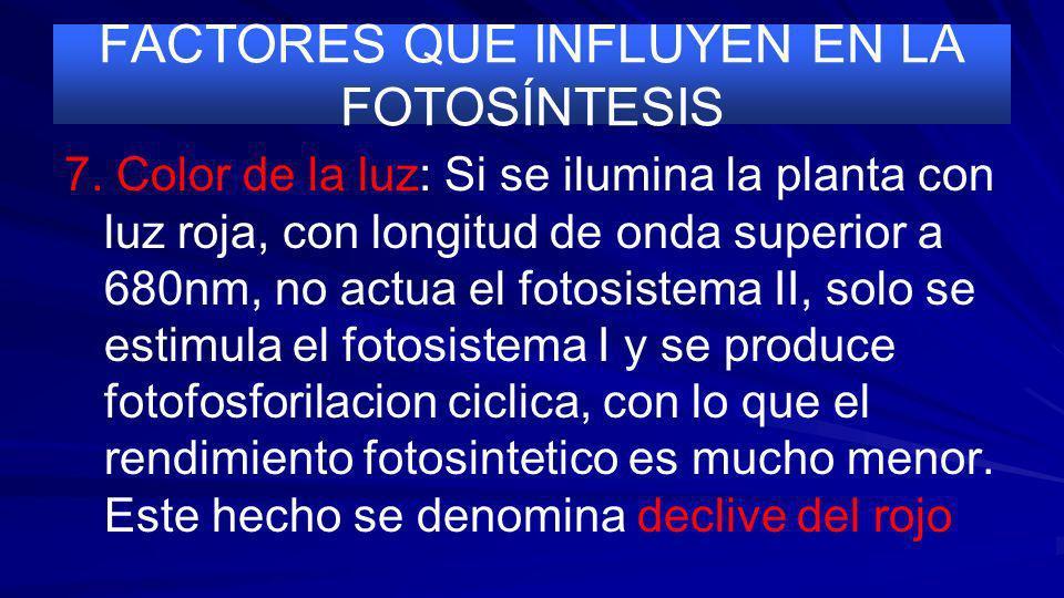 FACTORES QUE INFLUYEN EN LA FOTOSÍNTESIS 6. Concentracion de O 2 : Al aumentar baja el rendimiento fotosintetico debido a las perdidas por fotorrespir