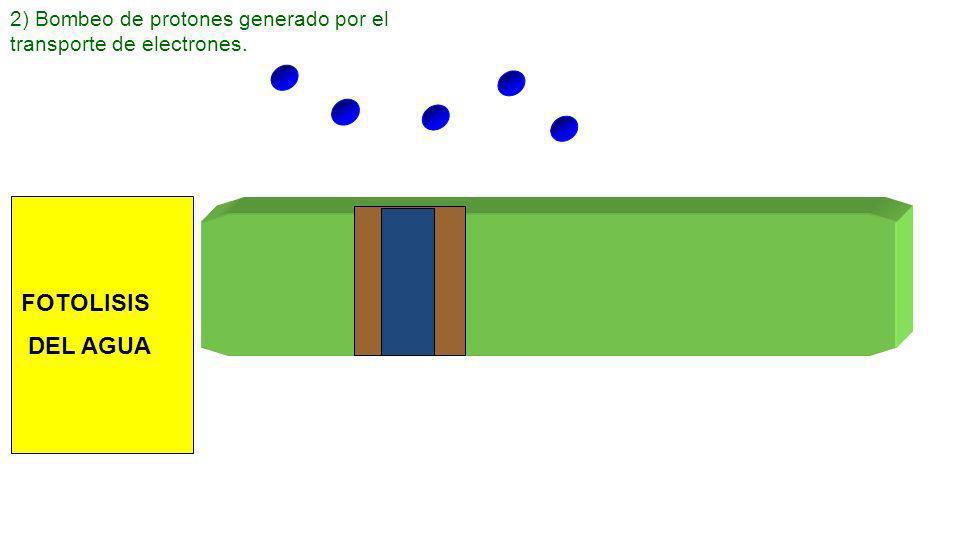 Fotosistema 2e - 1)Captación de la energía luminosa por los pigmentos fotosintéticos de los fotosistemas.