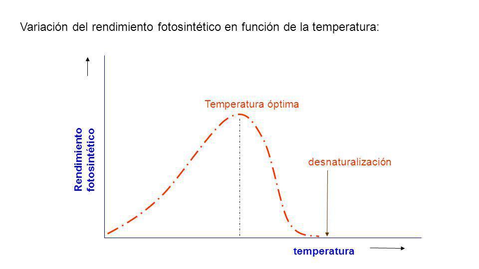 Influencia de la temperatura: Variamos la temperatura del recipiente, calentando suavemente el agua, y vamos contando las burbujas que se producen por
