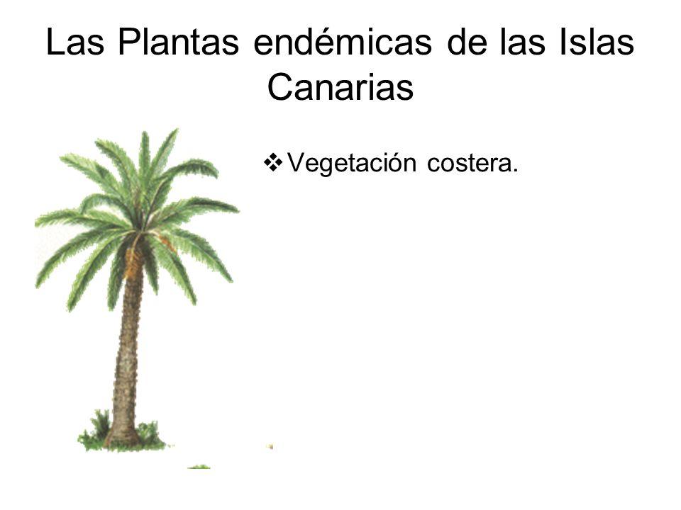 Las Plantas endémicas de las Islas Canarias Vegetación costera.