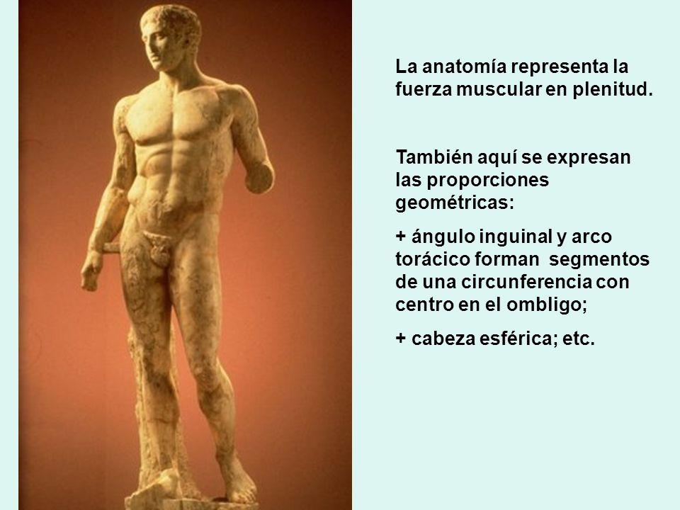 La anatomía representa la fuerza muscular en plenitud. También aquí se expresan las proporciones geométricas: + ángulo inguinal y arco torácico forman