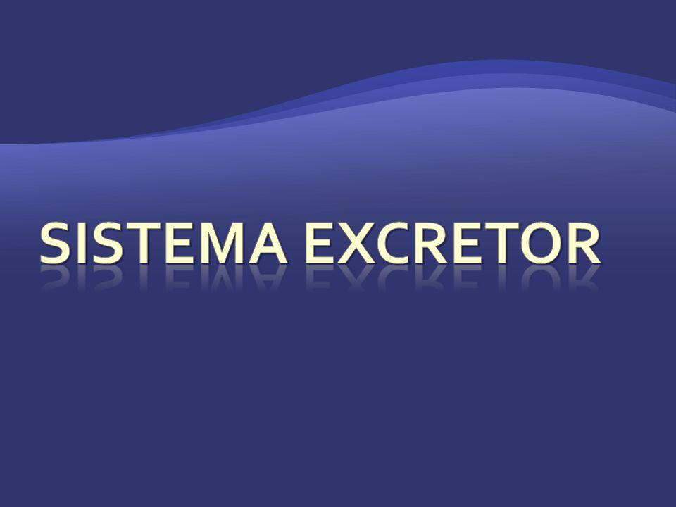 La excreción de todas las sustancias de desecho que provienen del metabolismo (respiración, digestión).